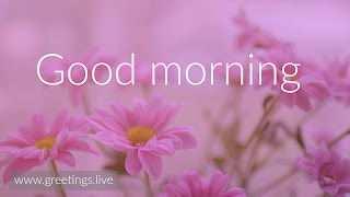 Good-Morning-greetings-Pink-flowers-Nature-HD