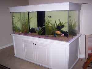 Giant Aquariums: 330 gal AQUARIUM   $2500 (New Port Richey)
