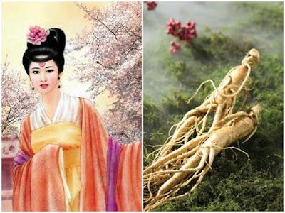 Có rất nhiều câu chuyện về nhân sâm Hàn Quốc