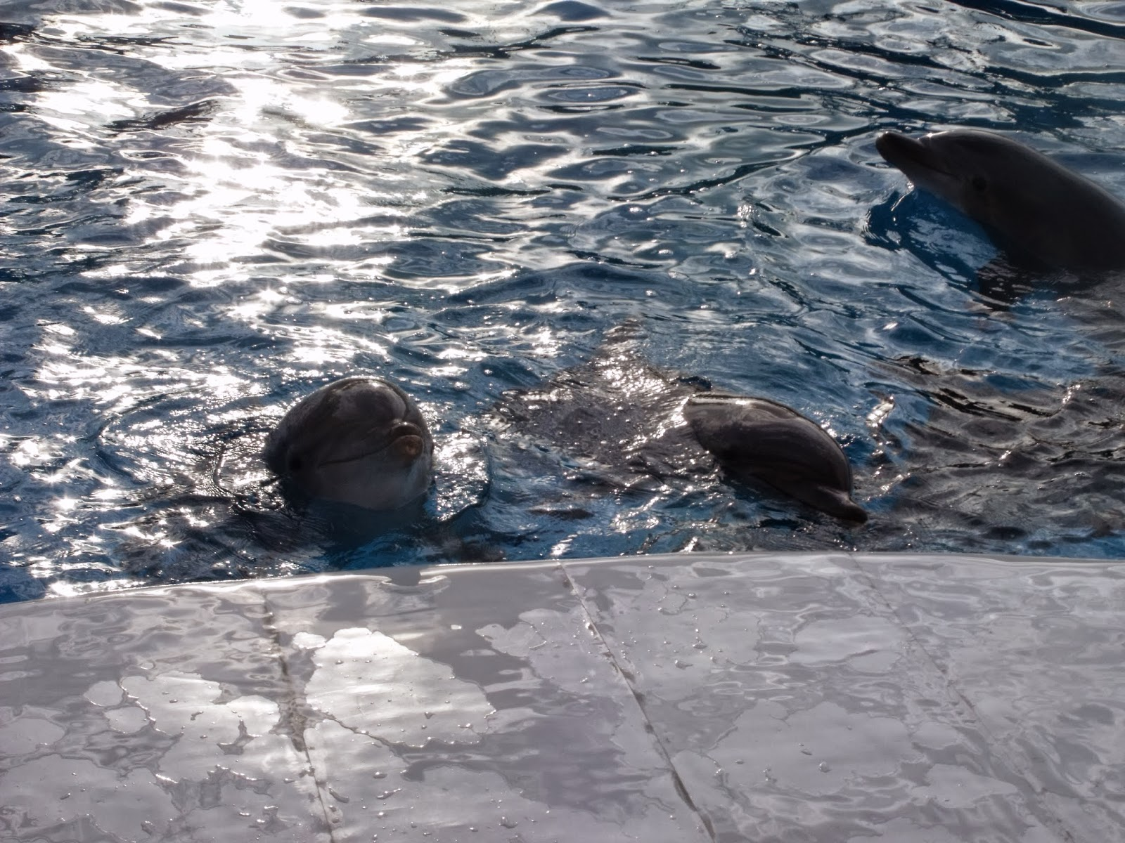 video rencontre avec les requins marineland