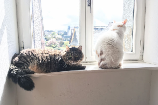 chat-fenêtre-mignon