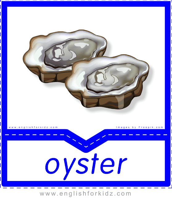 Oyster - English food flashcards for ESL students