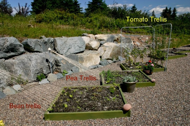 How to make tomato trellis
