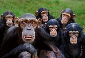 A ordem dos Primatas