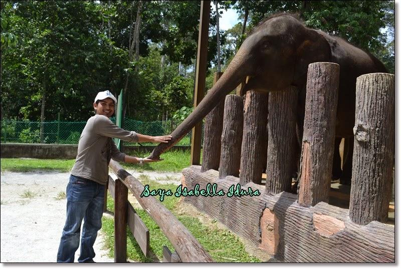 bagi makan gajah