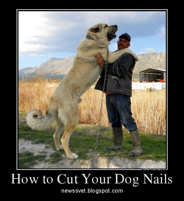 Cutting Dogs Nails When They Don T Like It