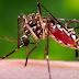 Estudo revela que vacina contra o zika tem potencial para prevenir doença na gestação