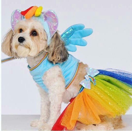 Rubieu0027s Rainbow Dash Dog Costume  sc 1 st  MLP Merch : costumes for little dogs  - Germanpascual.Com
