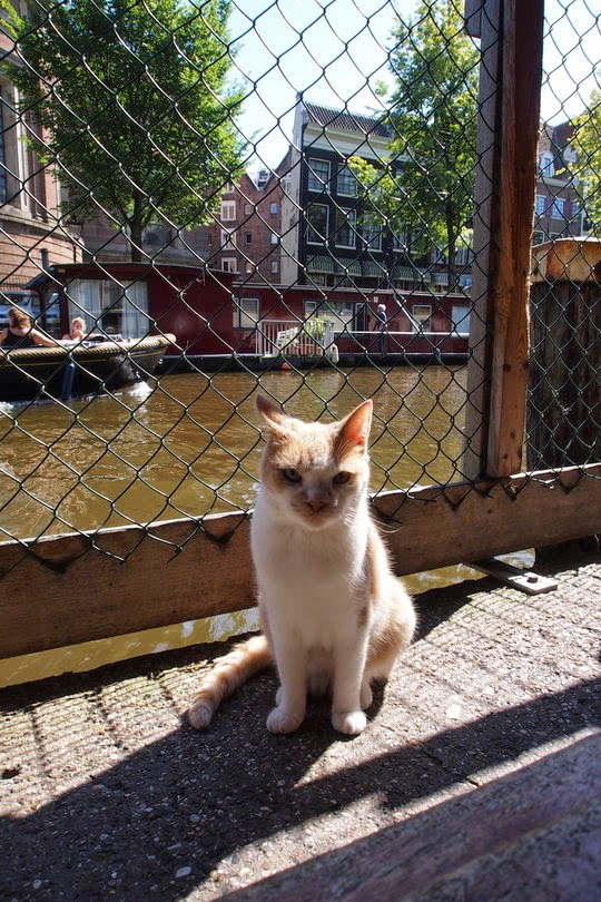 Cat Boat Amsterdam