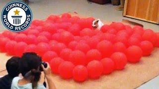 Fastest time to pop 100 balloons by a dog – Guinness World Records