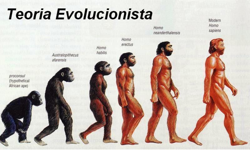 Evolução, Mecanismo da Evolução e Origem das Raças