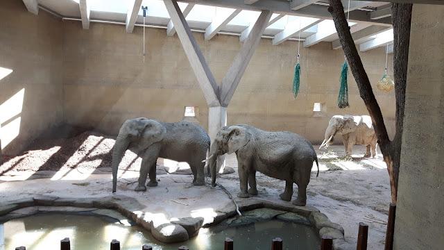 das neue Elefantenhaus Zolli Basel