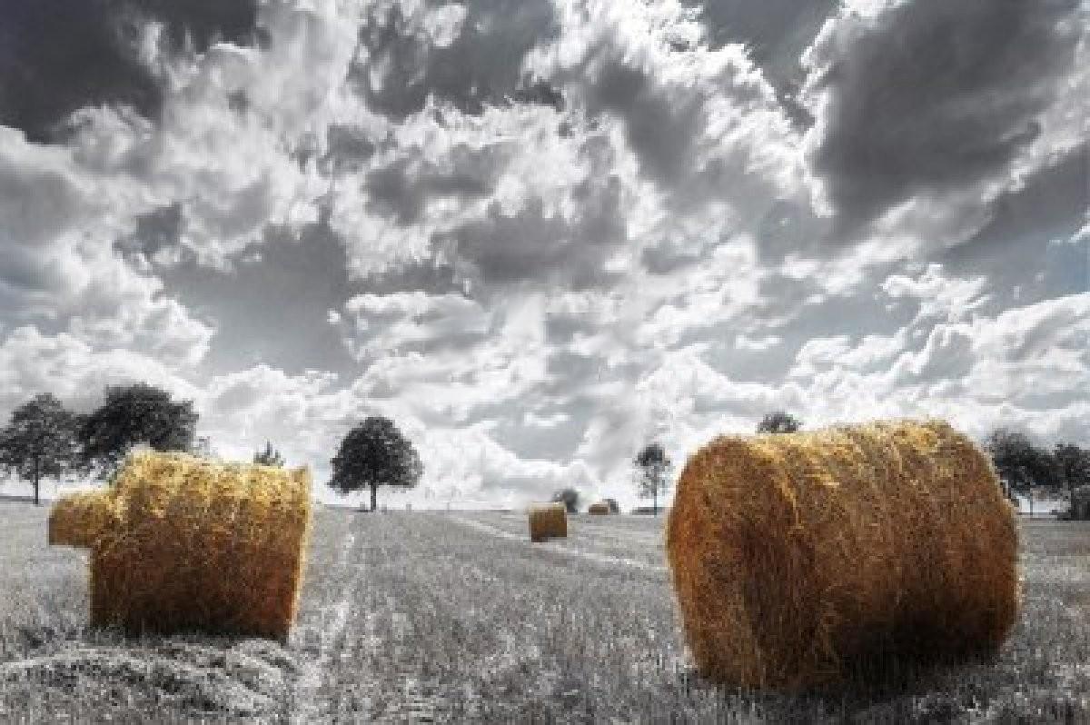 Scripture for today october 2011 - Gardening works in october winter preparations ...