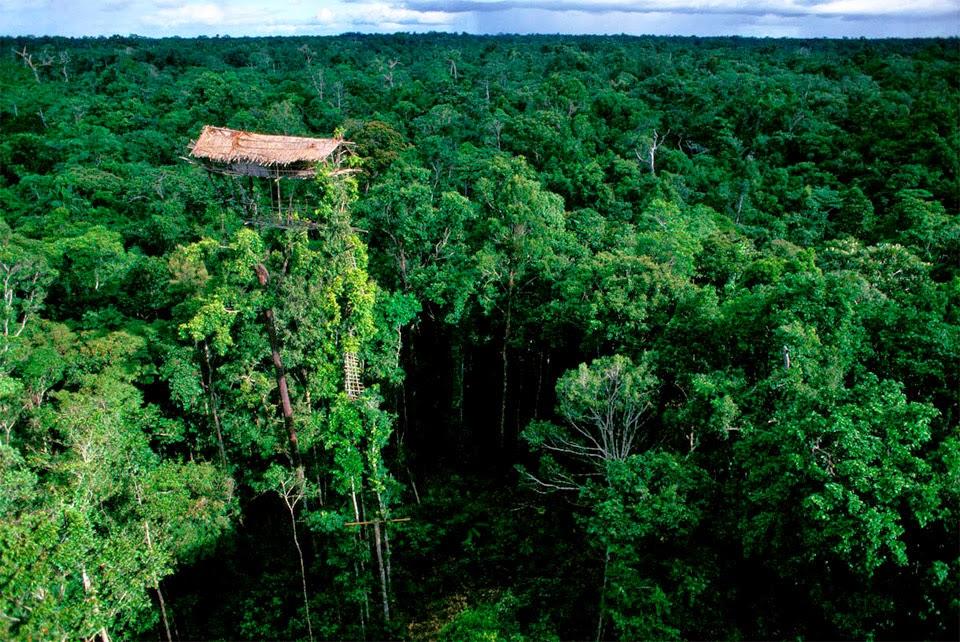 casa alta en los árboles de la tribu korowai