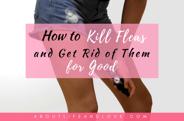 How to Kill Fleas and Get Rid of Them for Good