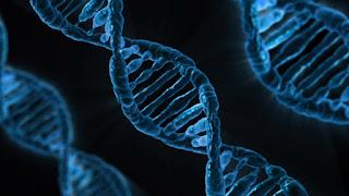 Pembelajaran tentang DNA pada manusia