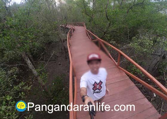 Paket Wisata Murah Mangrove