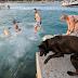 Σε ένα beach bar για σκύλους...