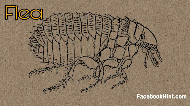 A flea can accelerate faster than the Space Shuttle? Science Fact