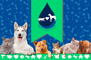 Sponsor - Rains Cats & Dogs