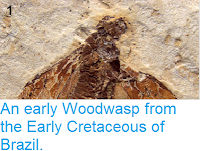 http://sciencythoughts.blogspot.co.uk/2013/05/an-early-woodwasp-from-early-cretaceous.html