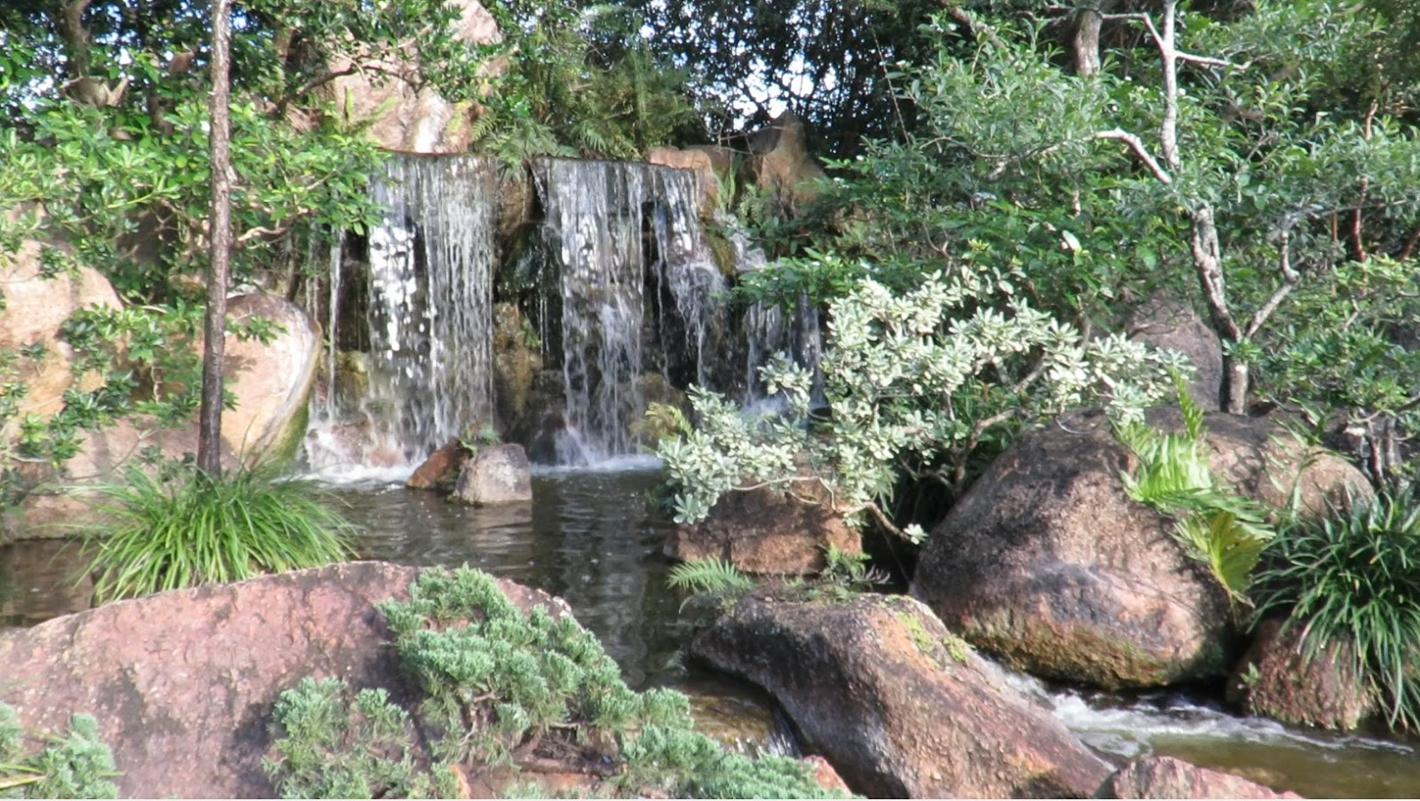 Backyard birding and nature march 2016 for Japanese meditation garden
