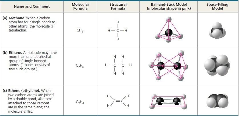 Carbon atoms can form diverse molecules by bonding to four other atoms - carbon bonds