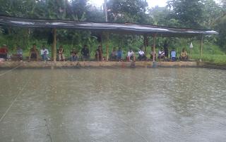 Umpan-Ikan-Mas-Harian-Musim-Hujan