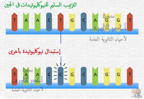 الطفرات – الثالث الثانوى - تصنيف الطفرات تبعاً لنوعها – الطفرات الجينية – إستبدال نيوكليوتيدة