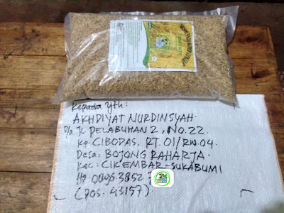 Benih pesanan AKHDIYAT N Sukabumi, Jabar.   (Sebelum Packing)