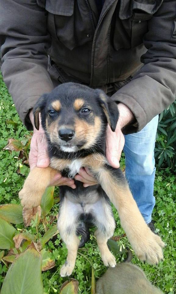 Cani taglia medio grande regalo
