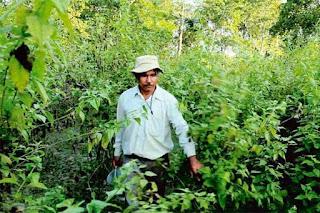 jadav payeng dan hutannya di assam india