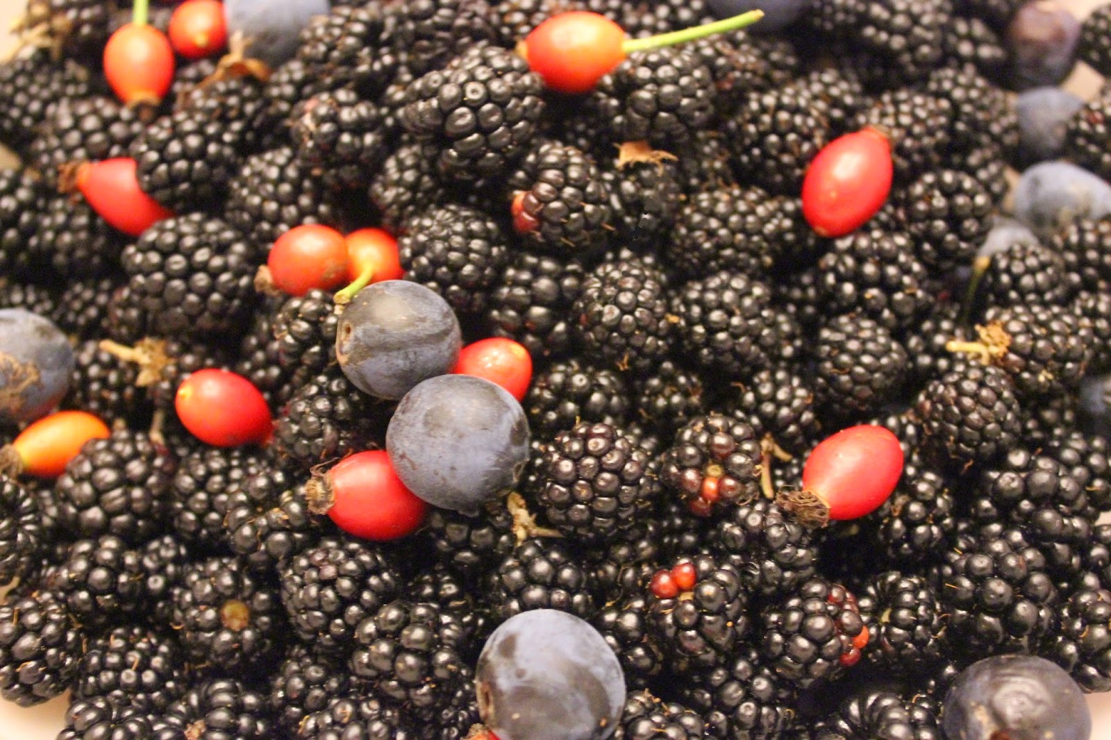 Wild fruits for a clafoutis recipe