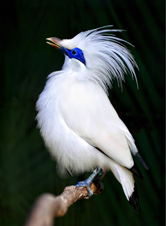 Inspiring Nature Photography By Carol Reynolds: Myna Bird ... - photo#37