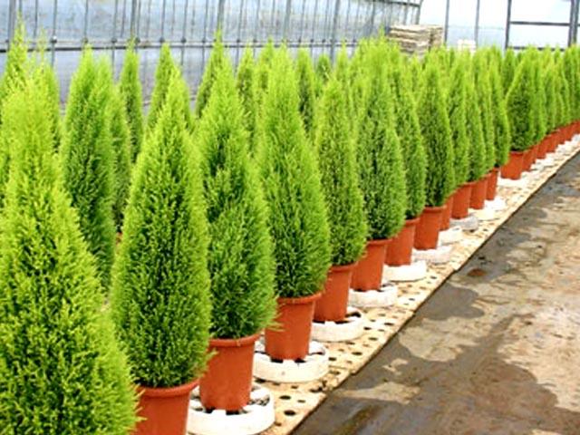 El nou garden julio 2016 for Plantas decorativas de exterior