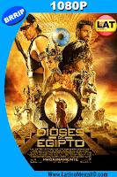 Dioses de Egipto (2016) Latino HD 1080P - 2016