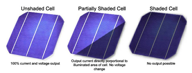 how shad affect cell production