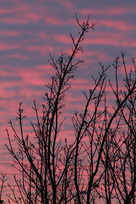 Pink and purple sunset with trees