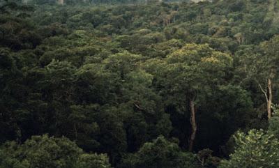 Inilah 5 Hutan paling Berbahaya di dunia