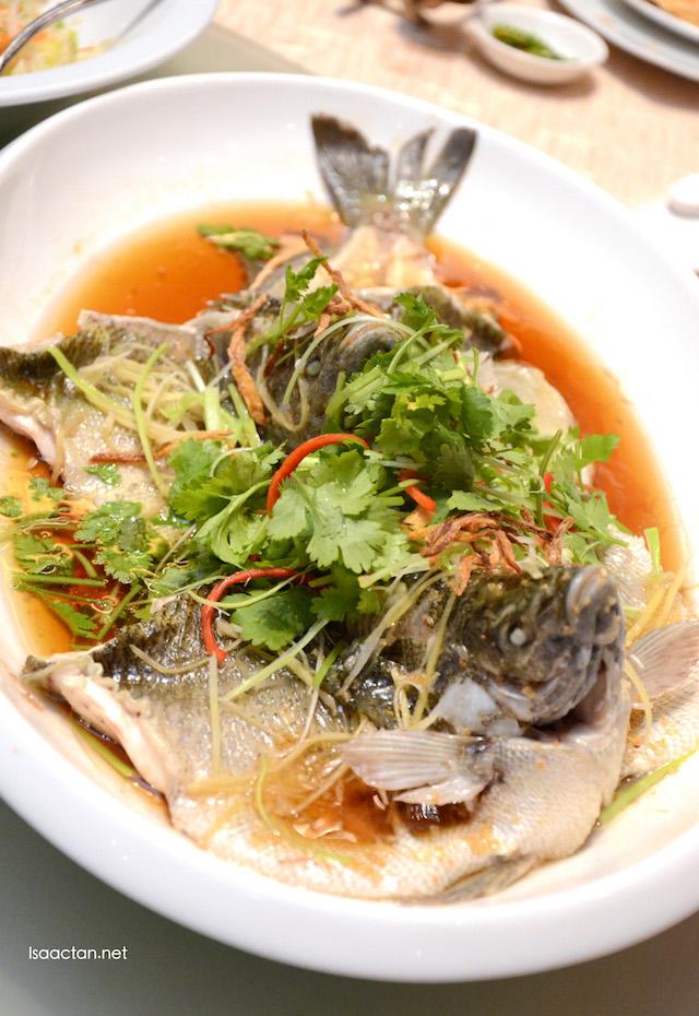 Steamed Live Australia Jade Perch Fish