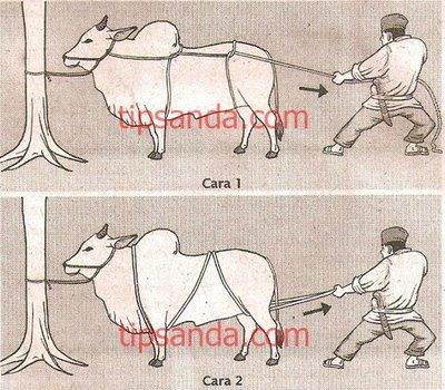 Tips Merobohkan Hewan Qurban