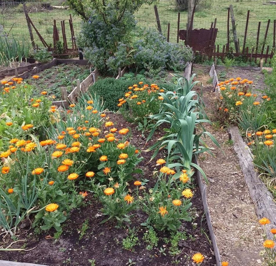 La huerta y vos for Plantas para huerta organica