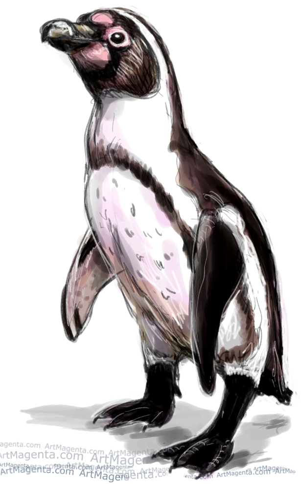 Humboldt Penguin  sketch painting. Bird art drawing by illustrator Artmagenta