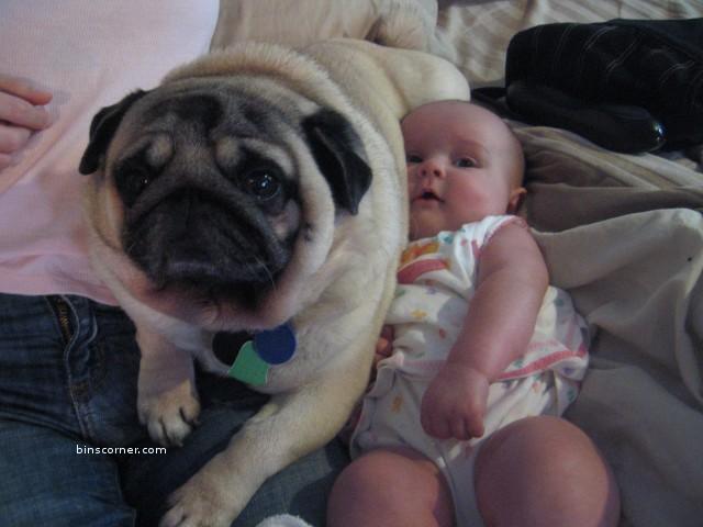 Only Black Wallpaper Actress Stills Cute Pug Dog Photos Vodafone Dog
