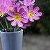 Yumurta Kutusundan Çiçek Yapımı