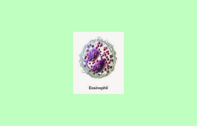 Pengertian Eosinofil, Fungsi Eosinofil, Ciri Eosinofil, Jumlah Eosinofil