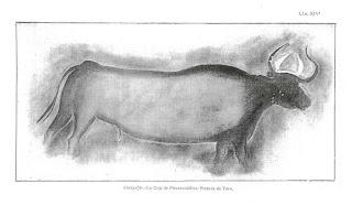 tormon-toro-abrigo-ceja-piezarrodilla