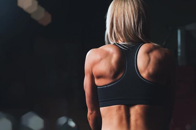 Musculature du dos