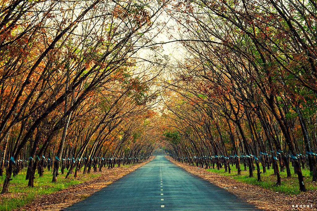 Đẹp ngỡ ngàng Gia Lai mùa lá rụng