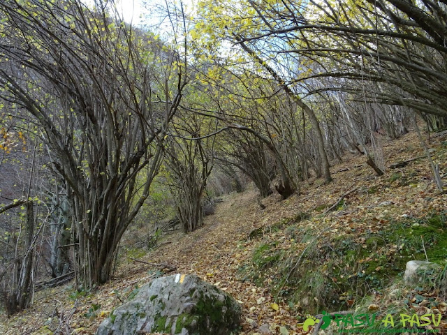 Ruta a Peña Melera y Los Pandos: Bosque sobre Cuevas